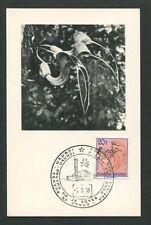 RUANDA-URUNDI MK 1958 FLORA ARISTOLOCHIA MAXIMUMKARTE MAXIMUM CARD MC CM d7839