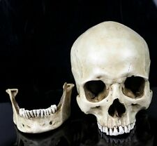 New White HuMan Skull Replica Resin Model Medical LifeSize Realistic Size 1:1