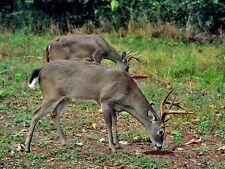 Texas Best Sweet and Salty Deer Buck Doe Attractant Lick Feed Bait 'Recipe Only'
