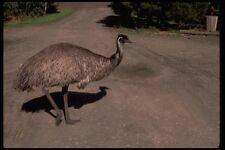069017 Emu Tower Hill Victoria A4 Photo Print