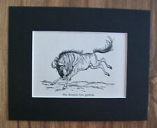Brindled Gnu Wildebeest Print Winifred Austen 1935 Animal Bookplate 8x10 Matted
