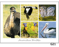 28 Australian Animal Postcards - kangaroos, emu, koala, possums