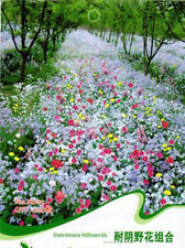 1Pack 200 Seeds formidable Tolerance Wildflowers Mix Seed Flower Seed FG UK