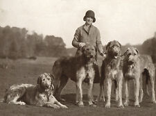 IRISH WOLFHOUND CHARMING DOG GREETINGS NOTE CARD LADY STANDING WITH FOUR DOGS