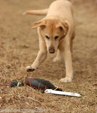 Avery Sporting Dog Greenhead Gear EZ Bird ATB Pheasant Training Bumper Dummy