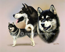 Alaskan Malamute Giclee Print by Robert J. May