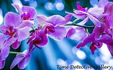 Orchids (3) - Giclee Photo Print