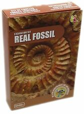Paleontology Archaeology Real Fossil Excavation Digging Kit Science Toy