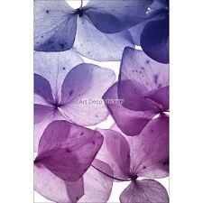 Magnete Da Frigorifero decocrazione Petalo violettes 60x90cm ref 6256 6256
