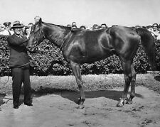 1946 Triple Crown Racehorse ASSAULT Glossy 8x10 Photo Thoroughbred Print Poster