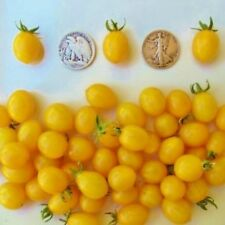 Blondkopfchen - Organic Heirloom Tomato Seeds - German Cherry - 40 Seeds