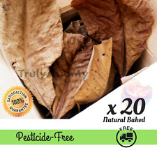 20 Grade A GIANT INDIAN ALMOND LEAVES FISH CATAPPA KETAPANG LEAVES For Aquarium