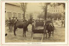 Photo Albuminé Pau Attelage BéarnaisVers 1880