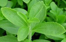 Stevia rebaudiana, Sweetleaf, Sugar Herb, Diabetes Plant Seeds (50 Nos)