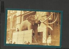 Nostalgia P/C Stuffed Elephant Natural History Museum South Kensington 1930