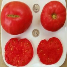 Brandywine OTV - Organic Heirloom Tomato Seeds - Awesome Beefsteak - 40 Seeds