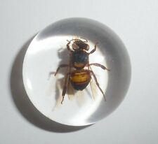 Insect Cabochon - Honey Bee : Apis mellifera (Round 25 mm - Clear) 1 piece Lot