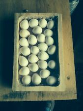 "12+Northern Bobwhite Quail Hatching Eggs for Incubation ""NPIP CERTIFIED"""