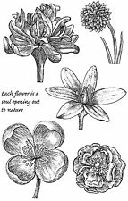 Rubber stamps of flower heads - Engraved Flowers