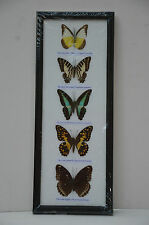 Wooden Framed Real Butterfly 5pc
