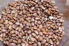 100 Seeds  Pinto bean seed   new seed for 2017 Non-Gmo,Heirloom Seeds