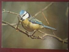 POSTCARD E3-4 ANIMALS BLUE TIT BRITISH BIRDS