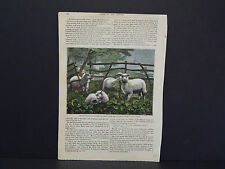 Sheep c.1890 Tis Opportunity That Makes The Thief #57
