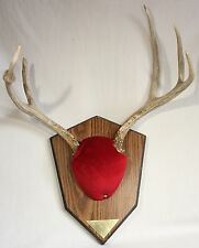 Taxidermy Deer Antler Mount Trophy Hunting Lodge Office Decor Non Typical 6 Pt.