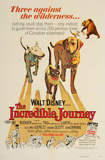 THE INCREDIBLE JOURNEY LAMINATED MINI MOVIE POSTER DISNEY A4 PRINT