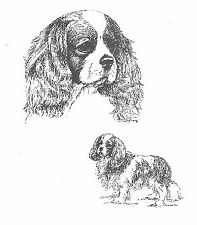 Cavalier King Charles Black and White Art Print by USA Artist Barbara Walker