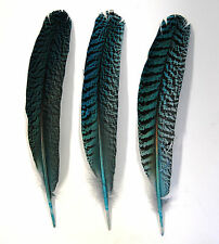 "3 Pcs PEACOCK QUILLS 10""-14"" Dyed TURQUOISE Feathers; Costume/Bridal/Halloween"