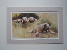 David Shepherd print 'Porkers' Pigs MOUNTED