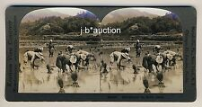 Japan RICE PLANTER / REIS PFLANZER * Vintage 1900s KEYSTONE Stereo Photo