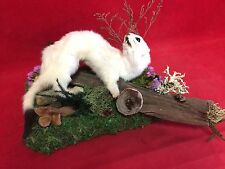 *Taxidermy Ermine Tabletop display w/bees/ladybug--squirrel-weasel-rat-mouse-bat