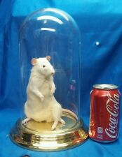 EXPERIMENT LAB FREAK RAT,SIDESHOW GAFF DISPLAY,TAXIDERMY,ODDITY,DEFORMED,MUTANT