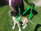 Dog Harness Heavy Duty 5 Sizes Choice of Color