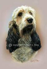 Basset Griffon Vendeen Head Study Print  by Robert J. May