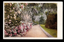 1901 The Slope Walk Magnolia on the Ashley South Carolina landscape postcard