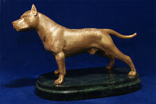 Hot cast bronze American Staffordshire Terrier sculpture.