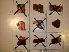 F Group Red Ammolite Ammonite Your Choice (Pick One) Ready to Make Jewelry