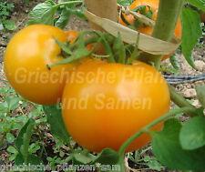 Amana orange Tomate * 10 Samen * historische Fleisch-Tomaten Sorte* Geschenk