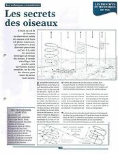 Schematic Flight the Birds Schéma Vol des Oiseaux Albatros Pigeon FRANCE FICHE