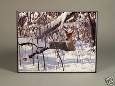 """Beautiful Nature Photograph of a Deer in the Snow 13.5"""" X 10.5"""" on 11 X 14 Board"""
