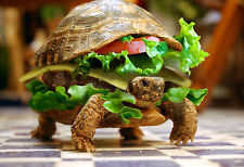 A4 Poster - Funny Turtle Burger (Animal Tortoise Picture Print Comedy Art)