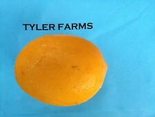 5+ Meyer Lemon organic citrus seeds, farm fresh, ready to grow