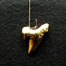 Anhänger, Haizahn,Fossil, 24 Karat vergoldet, Shark, Gold, Unikat, Handarbeit