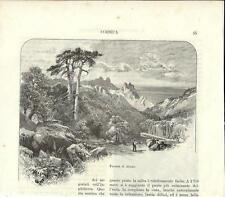 Stampa antica FORESTA AITONE Taglialegna Corsica 1892 Ancien Gravure Old Print