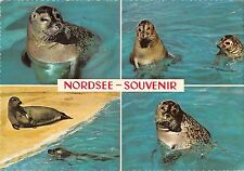 B98664 nordsee seal sceau germany animals animaux