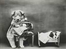 VICTORIAN STEAMPUNK DOG PUPPY OUTFIT BED SEWING MACHINE CLOTHES PHOTO GOTHIC