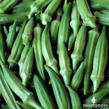 Heirloom Clemson Spineless Okra 100 Seeds Non-GMO USA + FREE Gift & COMB S/H